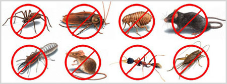 Pest-Control-Banner