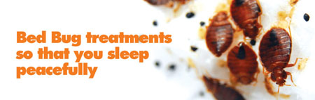bed-bug-treatment