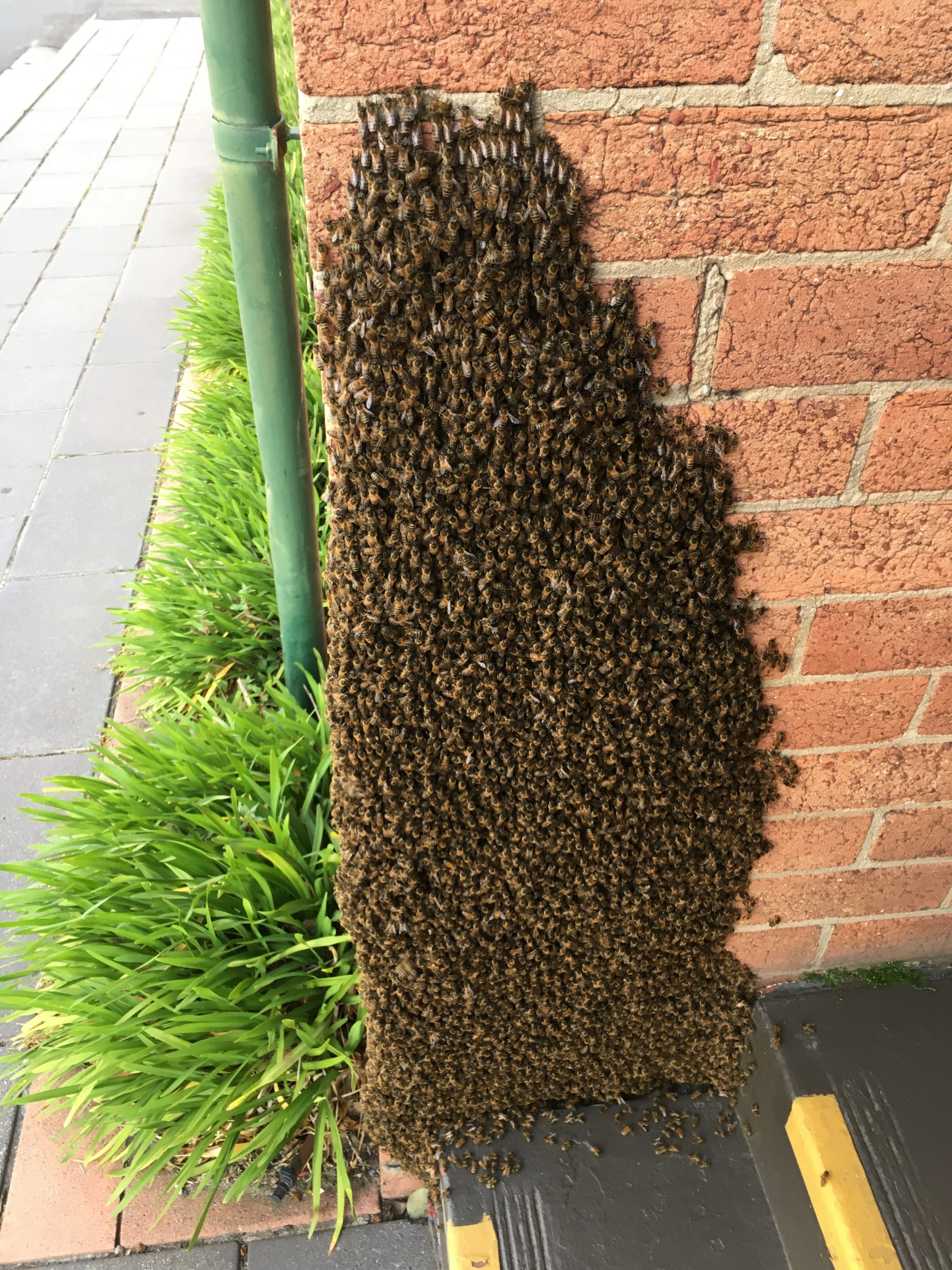 Bee Removal Melbourne & Swarm Removal