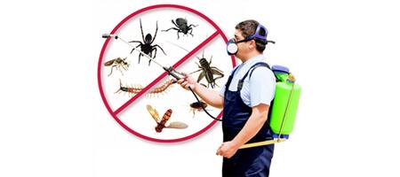 Pest Control Brunswick