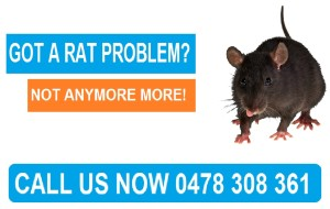 Rat Exterminator Northern Suburbs of Melbourne