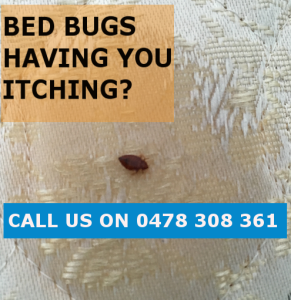 Bed Bugs Removal Melbourne CBD