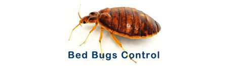 Bed Bug Control Brunswick