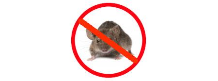Mice exterminator Brunswick
